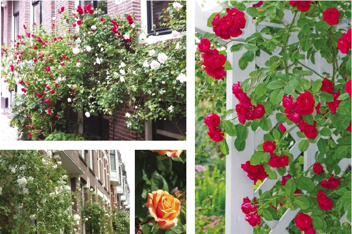 inpiratie beplanting rozen